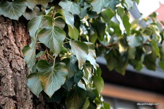 chicago-photos-leaves-tree