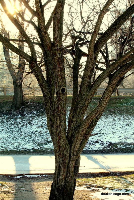 chicago-photos-tree-sunlight