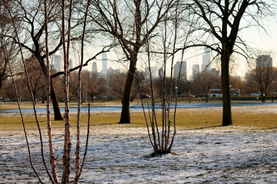 chicago-photos-trees-skyline