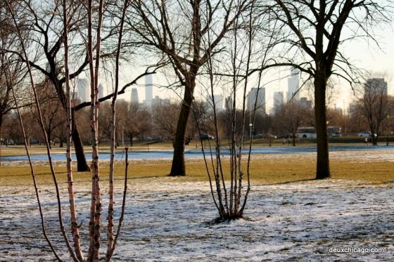 chicago-photos-trees-skyline